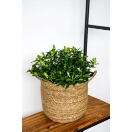 Natural woven lined baskets (H30cm)