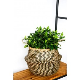 Seagrass Chevron black lined basket